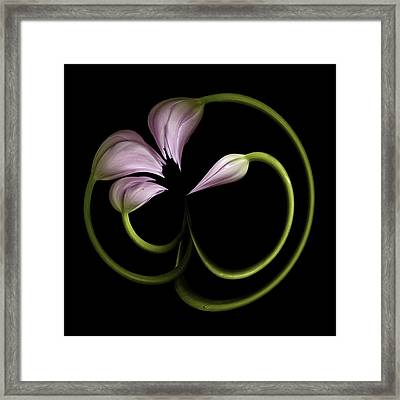 Tulip Swirl Framed Print by Virginia Paul