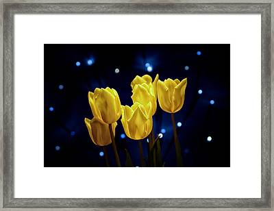 Tulip Twinkle Framed Print by Tom Mc Nemar