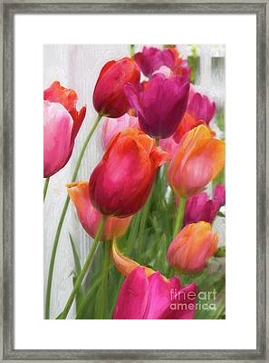 Tulips Framed Print by A New Focus Photography