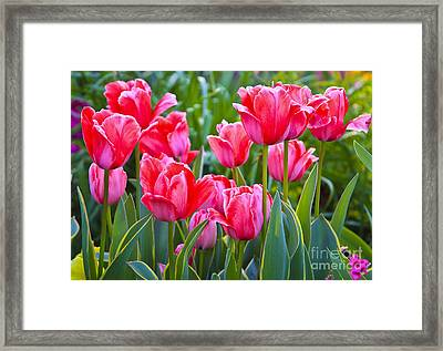 Tulips Framed Print by Edita De Lima