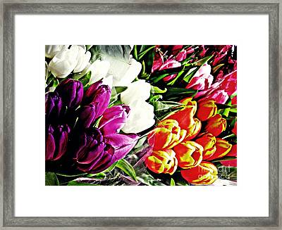 Tulips For Sale 2 Framed Print by Sarah Loft