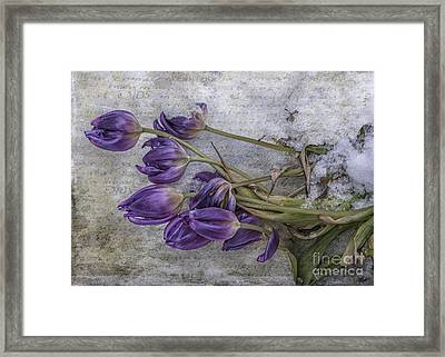 Tulips Frozen Framed Print by Terry Rowe