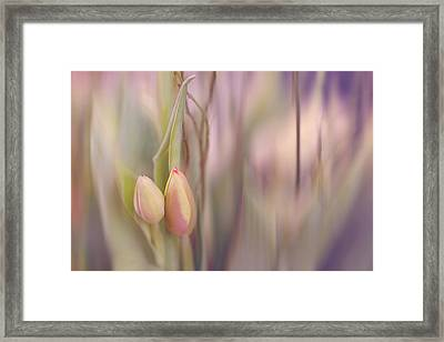 Tulips In Pastel Framed Print by Cindy Grundsten