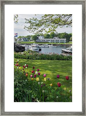 Tulips On Perkins Cove Framed Print by Joseph Smith