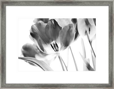 Tulips Framed Print by Silke Magino