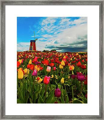 Tulips Windmill 2 Framed Print by Dale Stillman