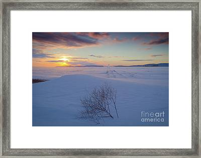 Tumble In The Snow Framed Print by Idaho Scenic Images Linda Lantzy