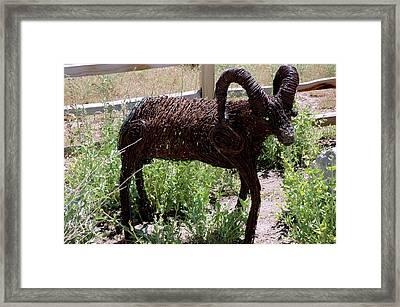 Mammals Framed Print featuring the photograph Tumble Weed Sheep Reno Nevada by LeeAnn McLaneGoetz McLaneGoetzStudioLLCcom