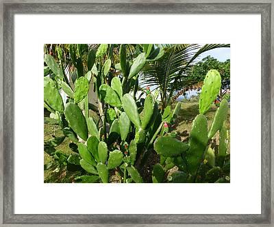 Tuna Cactus Framed Print by Megan Saul