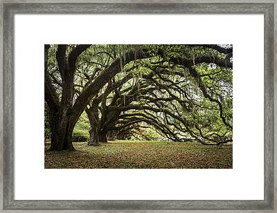 Tunnel Of Oaks Framed Print by Jon Glaser