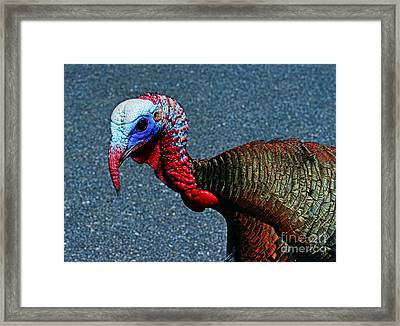 Turkey One Angry Bird Framed Print by Paul Ward