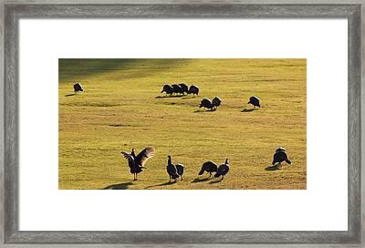 Turkey Stretch Framed Print by Linda Meyer