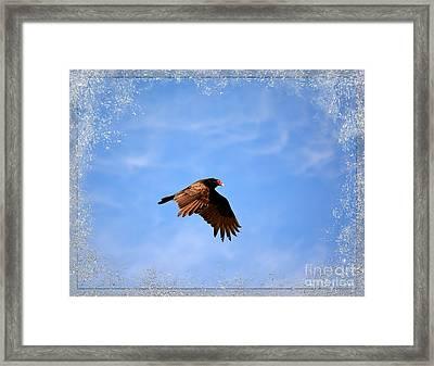 Turkey Vulture Framed Print by Brenda Bostic