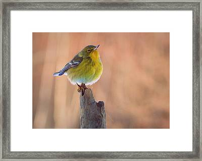Turn Your Face To The Sun Framed Print by Karen Cook