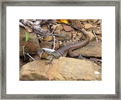 Turquoise Feet Framed Print by Arry Murphey