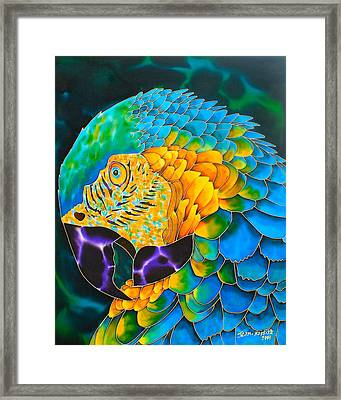 Turquoise Gold Macaw  Framed Print by Daniel Jean-Baptiste