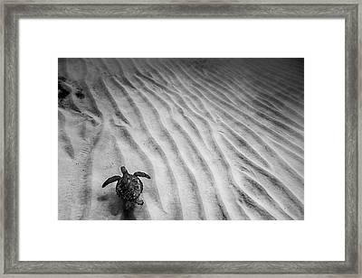 Turtle Ridge Framed Print by Sean Davey
