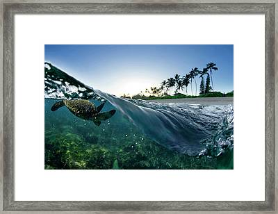 Turtle Split Framed Print by Sean Davey
