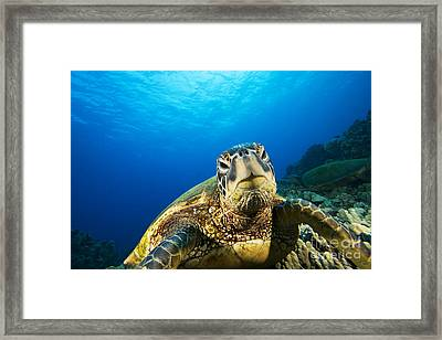 Turtle Stare Framed Print by Dave Fleetham - Printscapes