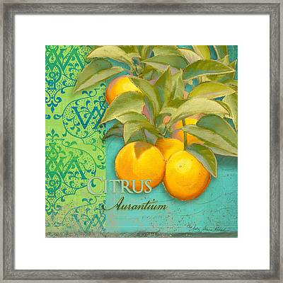 Tuscan Orange Tree - Citrus Aurantium Damask Framed Print by Audrey Jeanne Roberts