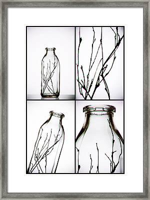 Twigs - Four Panel Framed Print by Tom Mc Nemar