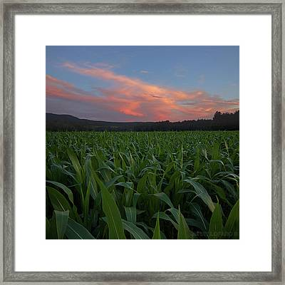 Twilight Cornfield Framed Print by Jerry LoFaro
