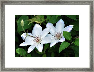 Twins  Framed Print by Don  Wright