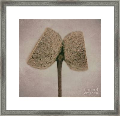 twins DP Framed Print by SK Pfphotography