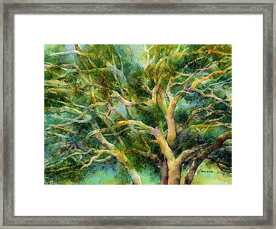 Twisted Oak Framed Print by Hailey E Herrera