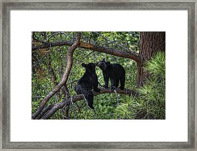 Two Bear Cubs Kissing Up A Tree Framed Print by Paul W Sharpe Aka Wizard of Wonders