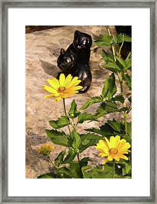 Two Black Cats And False Sunflowers Framed Print by Douglas Barnett