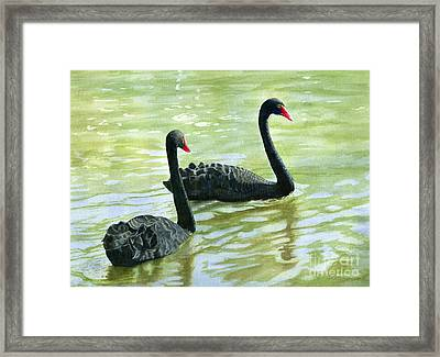 Two Black Swans Framed Print by Sharon Freeman