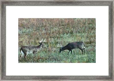 Two Bucks In A Field Framed Print by Dan Sproul