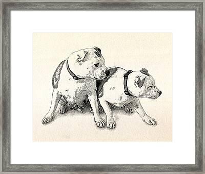 Two Bull Terriers Framed Print by Michael Tompsett