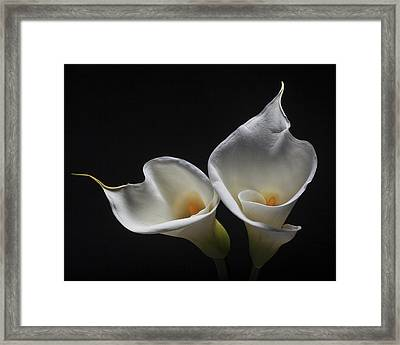 Two Calla Lilies Framed Print by George Oze