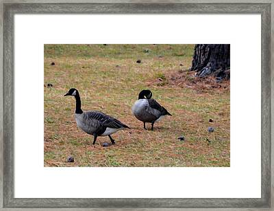 Two Canadian Geese 1 Framed Print by Lanjee Chee