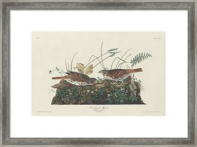 Two-colored Sparrow Framed Print by John James Audubon
