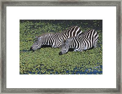 Two For Lunch Framed Print by Sandra Bronstein