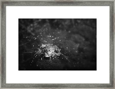 Two Frogs In A Pond Mating By Laying Framed Print by Roberta Murray