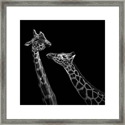 Two Giraffes In Black And White Framed Print by Lukas Holas