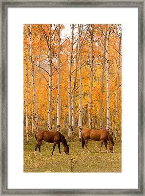 Two Horses Grazing In The Autumn Air Framed Print by James BO  Insogna