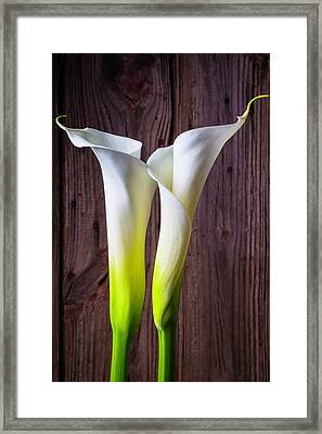 Two Lovely Calla Lilies Framed Print by Garry Gay