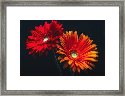 Two Luminous Daises Framed Print by George Oze
