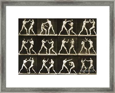Two Men Boxing Framed Print by Eadweard Muybridge
