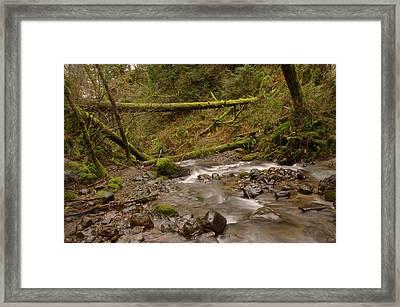 Two Mossy Logs  Framed Print by Jeff Swan