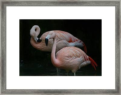Two Of A Kind Framed Print by Fraida Gutovich