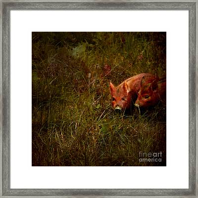 Two Piglets Framed Print by Angel  Tarantella