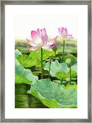 Two Pink Lotus Blossoms With Bud Framed Print by Sharon Freeman