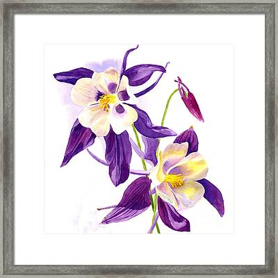 Two Purple Columbine Flower Square Design Framed Print by Sharon Freeman