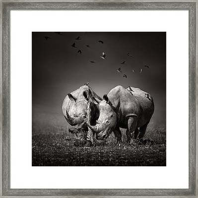Two Rhinoceros With Birds In Bw Framed Print by Johan Swanepoel